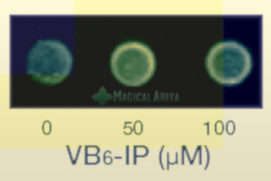VB6-IP                            R3Untitled-1
